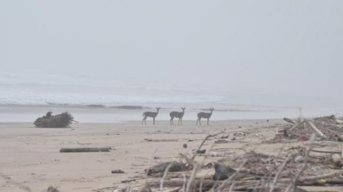 Ini Identitas Tiga Bocah SMP yang Hilang Terseret Ombak Pantai Trianggulasi Banyuwangi