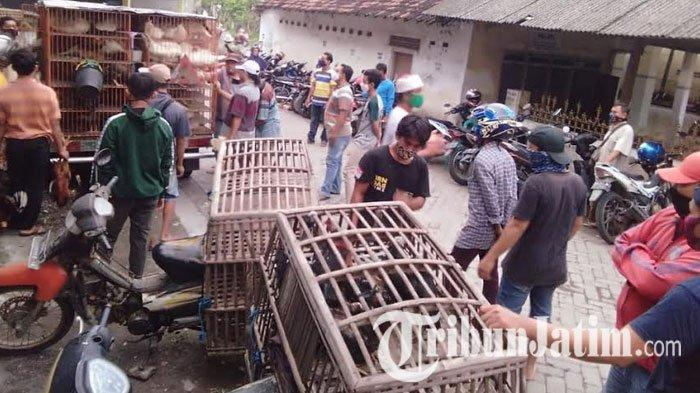 4 Pedagang Ayam Pasar Sidowungu Gresik Positif Corona Seusai Swab, Pasien OTG dan Masih 1 Keluarga