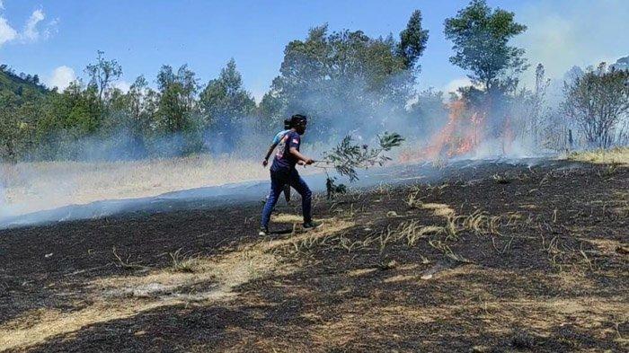 Lahan Parkir Wisata Kawah Wurung Bondowoso Terbakar, Api Nyaris Merembet ke Mobil Pengunjung