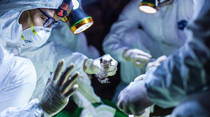 Wabah Virus Corona Kapan Berakhir? Ahli Sebut Manusia Bakal Dihadapkan 2 Kemungkinan 'Nasib'