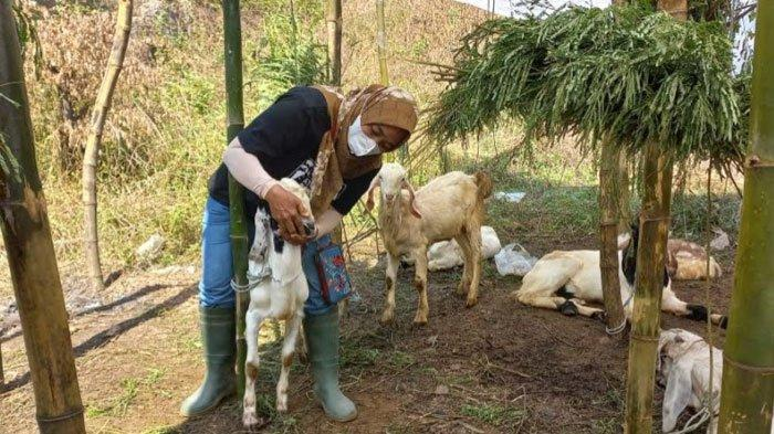 Cegah Penyakit Ternak, Pengawasan Hewan Qurban di Kabupaten Pasuruan Akan Dilakukan Secara Ketat