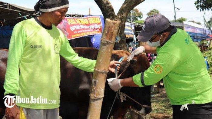 Jelang Idul Adha 1442 H, Satpol PP Surabaya Ingatkan Tak Berkerumun Saat Penyembelihan Hewan Kurban
