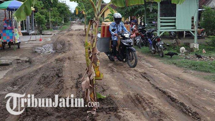Tengah Jalan Dusun Sendangrejo Jombang Ditanami Belasan Pohon Pisang, Kecewa Jalan Rusak Parah