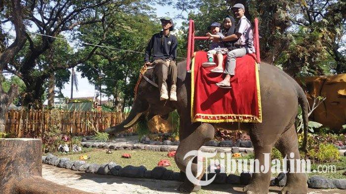 Asyiknya Wahana Breakfast with Elephant KBS, Naik Gajah Sekaligus Menyantap Hidangan Khas Surabaya