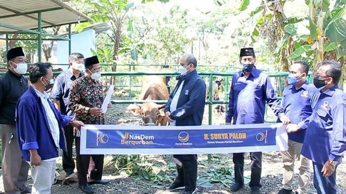 Idul Adha 2021, Partai Nasdem Jawa Timur Salurkan 64 Ekor Sapi Kurban ke Ponpes dan Ormas Keagamaan