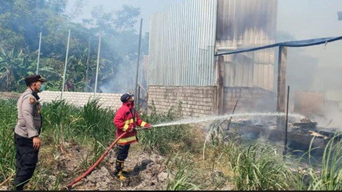5000 Ekor Ayam Jadi 'Ayam Bakar' Akibat Kebakaran Kandang di Kunjang Kediri, Pemilik Rugi 1 Miliar