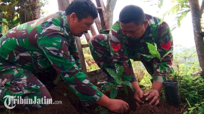 Prajurit TNI Kediri Tanam 2800 Batang Bibit Kopi Bantu Tingkatkan Perkebunan Kediri