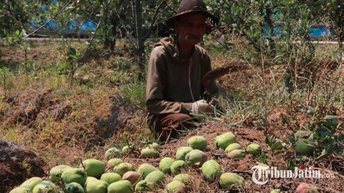 DPRD Batu Dorong Pertemuan Semua Pihak Cari Solusi Permasalahan Apel