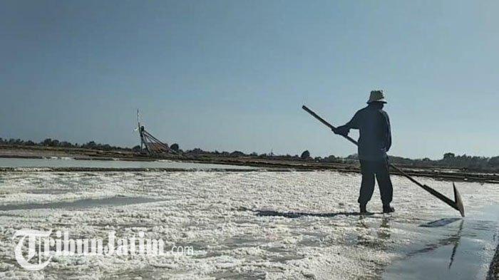 Target Produksi Garam di Sampang Madura Terus Meningkat di Tengah Semangat Petani yang Kendur