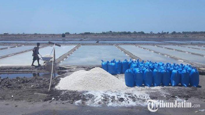 Panen Garam di Musim Kemarau 2019 Buat Petani Terpuruk, Harga Garam di Pamekasan Terpantau Anjlok