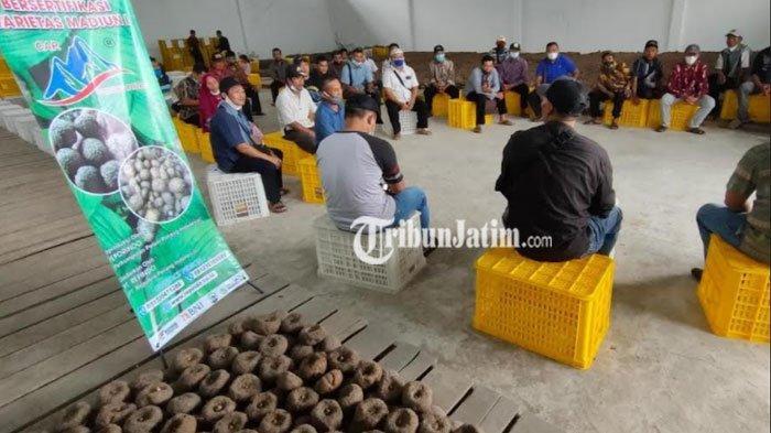 Studi Banding ke Madiun, Petani Porang Trenggalek Borong Benih Bersertifikasi Varietas Madiun 1