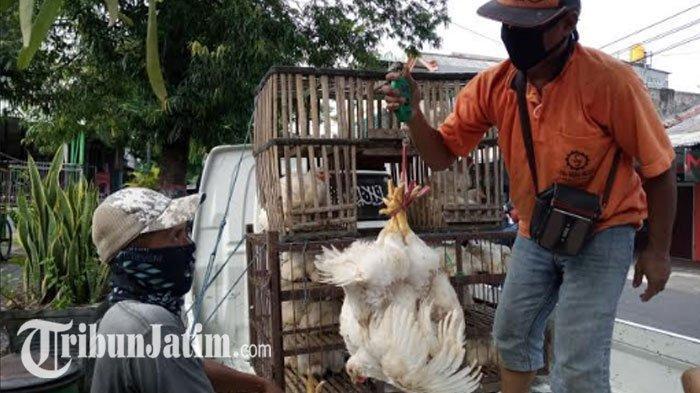 Nasib Pilu Peternak Ayam di Jatim, Harga Anjlok 7500 Hingga 9000 per Kilo, Kondisi Pasar Jadi Sebab