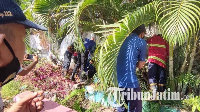 Petugas Damkar tengah berupaya mengevakuasi ular yang bersembunyi di balik tembok taman di Kelurahan Sukabumi, Kecamatan Mayangan, Kota Probolinggo, Kamis (9/9/2021).