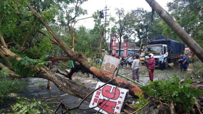 6 Pohon Tumbang Akibat Hujan Angin di Tulungagung, Terjadi Kemacetan Lebih dari 2 Km