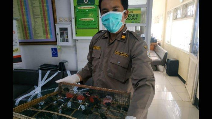 Tak Kantongi Surat Karantina, 980 Burung Beragam Jenis dari Balikpapan Disita Petugas Tanjung Perak