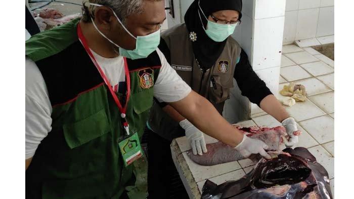 Ratusan Ekor Hewan Kurban di Kota Blitar Terkena Penyakit Cacing Hati, Daging Tetap Aman Dikonsumsi