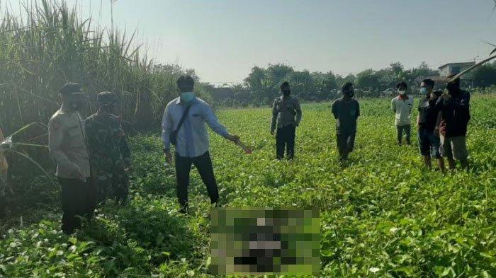 Terungkap Identitas Mayat Pria di Areal Persawahan Kangkung Kabupaten Mojokerto