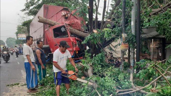 Truk Muatan Tembakau Ringsek usai Tabrak Pohon Sono di Mojokerto, Begini Kondisi Sopir dan Kernet