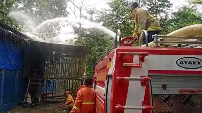 Kandang Ayam di Trenggalek Dilalap Api, Kerugian Ditaksir Mencapai Puluhan Juta Rupiah
