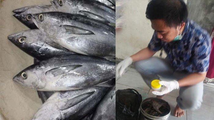 Warga Jember Keracunan Ikan Tongkol di Malam Tahun Baru, Hasil Lab Ungkap Faktor Penyebab Sebenarnya
