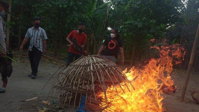 Judi Sabung Ayam di Puncu Kediri Dibubarkan Polisi, Banyak Penjudi Lari Hingga Area Persawahan