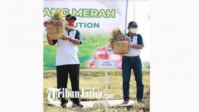 Antisipasi Harga Bawang Merah Anjlok Saat Panen Raya, Pemkab Nganjuk Gandeng Program Agro Solution