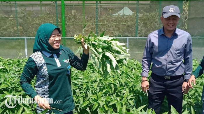 Kembangkan Mini Agrowisata di Tengah Kota, Pemkot Surabaya Bakal Tambah Jenis Tanaman Baru