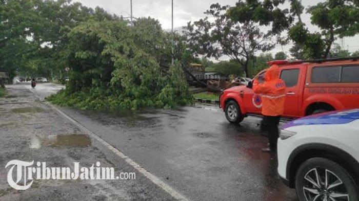 2 Pohon Bongsor Tumbang di Akses Menuju Jembatan Suramadu, Imbas Bangkalan Diterjang Hujan Angin