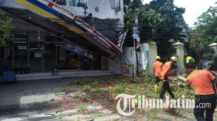 Pohon Flamboyan Tua Berusia Ratusan Tahun Roboh Timpa Indomaret di Kota Madiun