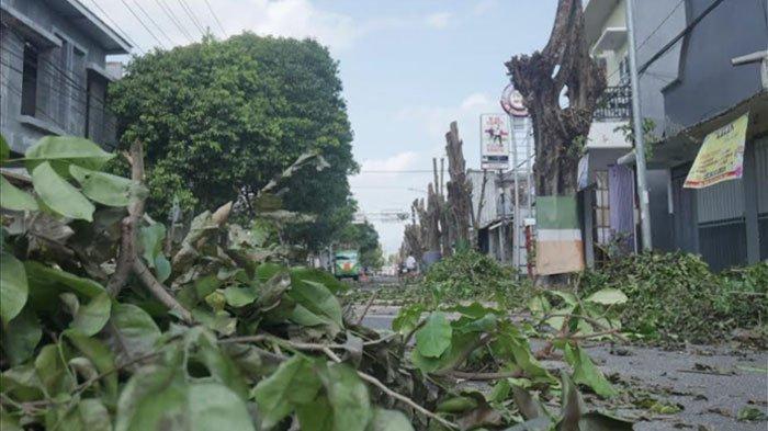 Memasuki Musim Penghujan, DLH Lumajang Kebanjiran Permintaan Tebang Pohon Rawan Tumbang