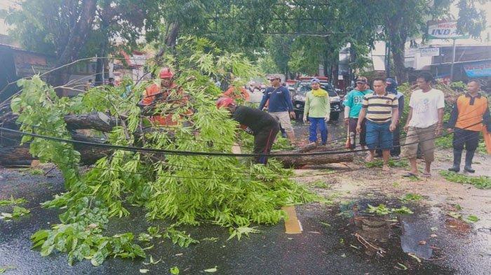 Hujan & Angin Kencang di Bojonegoro, Belasan Rumah Rusak & Pohon Tumbang di Empat Kecamatan
