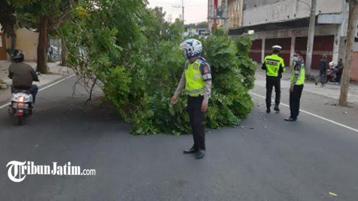 Pohon Besar Tumbang di Jalan Raya Kediri-Pare, Pengendara Motor Nyaris Tertimpa