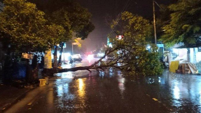 Angin Kencang dan Hujan Deras, Pohon di Mojokerto Tumbang Menimpa Pengendara Motor, 1 Orang Tewas