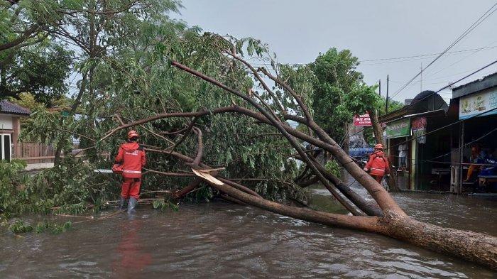 Hujan Deras Disertai Angin Sejumlah Pohon Tumbang di Kota Kediri