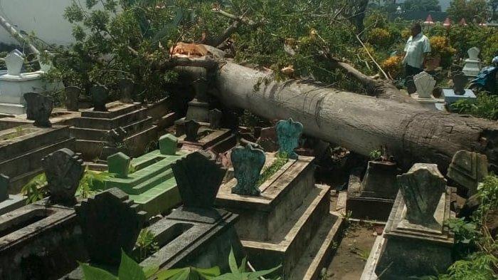 Angin Kencang Kembali Terjang Kota Blitar, Pohon di 3 Lokasi Tumbang
