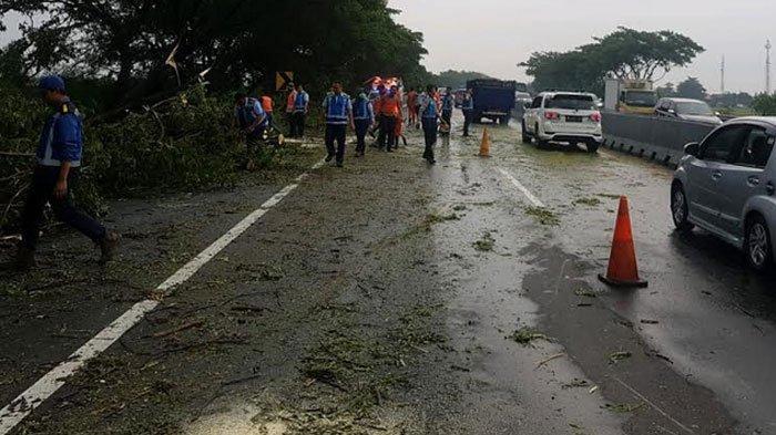 Hujan Lebat Disertai Angin Kencang Bikin Pohon Tumbang di Tol Porong Sidoarjo, Macet 300 Meter