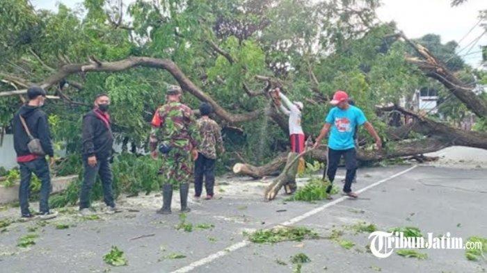 Pohon 20 Meter Roboh Timpa Teras Rumah Warga Kota Blitar, Sering Dilaporkan ke DLH: Sudah Tua