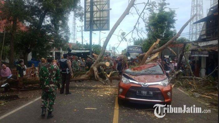 Pohon Tumbang di Bangkalan Timpa Toyota Calya saat Melintas, Satu Penumpang Dilarikan ke Rumah Sakit