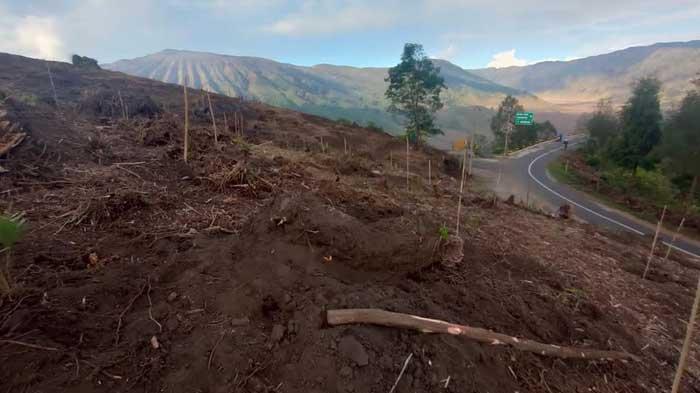 WALHI Jawa Timur Mengkritik Rencana Pembangunan Jembatan Kaca di Kawasan TNBTS