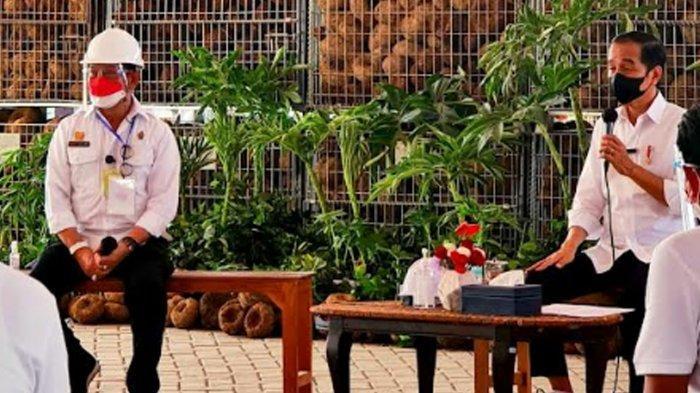 Presiden Jokowi Minta Kementan Serius Kembangkan Porang, 'akan Jadi Makanan Sehat Masa Depan'