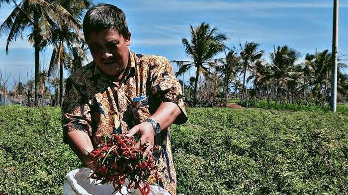 Siasati Musim Kemarau, Dirjen Hortikultura Pacu Pengembangan Varietas Cabai Unggul di Probolinggo