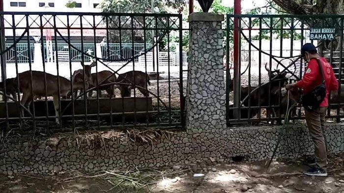 Hampir Dua Tahun Tanpa Pengunjung, Begini Kondisi Koleksi Binatang Pendopo Tulungagung