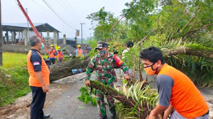Pohon Tumbang di Trenggalek, Timpa Pengendara Sepeda Motor hingga Terluka