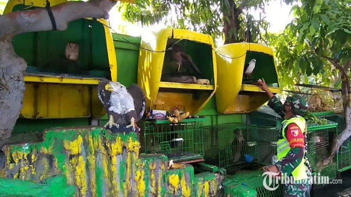 Edukasi Cinta Satwa Liar, Koramil Sukolilo Dirikan Mini Zoo dengan Koleksi Puluhan Hewan