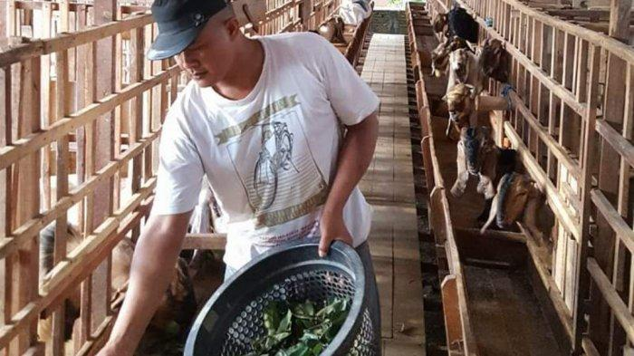 Menjelang Idul Adha Dinas Ketahanan Pangan Kabupaten Kediri Bagikan Tips Aman Pilih Hewan Kurban