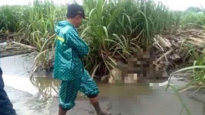BREAKING NEWS - Ditemukan Mayat Laki-laki di Kandangan Kediri, Diduga Sopir Backhoe Asal Surabaya