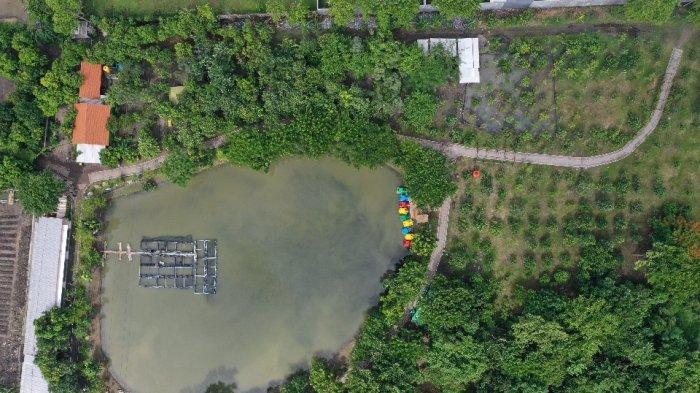 Tiga Kebun Mangrove di Surabaya Siap Dibuka, Pengunjung Wajib Gunakan Aplikasi PeduliLindungi