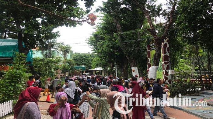 Momen Libur Natal Dimanfaatkan Orang Rekreasi ke Kebun Binatang Surabaya, Pengunjung Tembus 27 Ribu