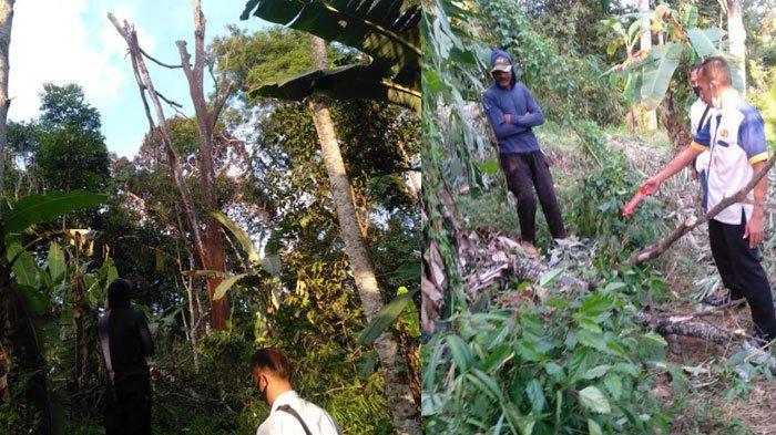 Susanto, warga Desa Talun, Kecamatan Ngebel, Ponorogo Tewas Terjatuh dari Pohon Petai, Rabu (7/7/2021).