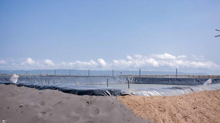 Bupati Jember Temukan Tambak Makan Area Sempadan Pantai